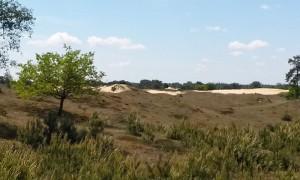 De duinen van Appelscha