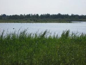 Het meer met de flamingo's