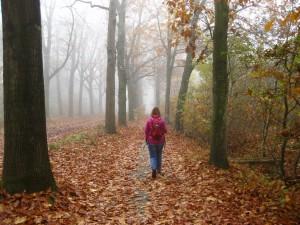 Herfstkleuren in de buurt van Vledder